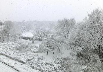20120229雪の国分寺崖線.JPG