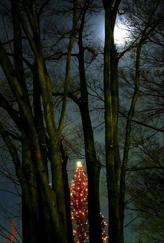 おぼろ月夜とクリスマスツリー.JPG