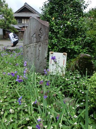 07芭蕉の歌碑 今日ばかり人も年寄れ初時雨.JPG