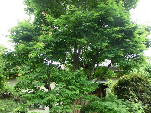 09防風林.JPG