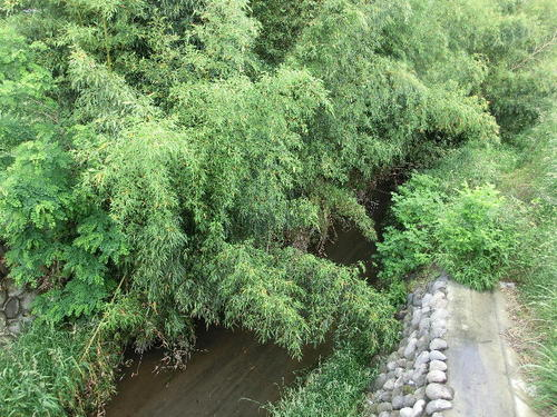 10染谷川の北側にも用水路が.JPG